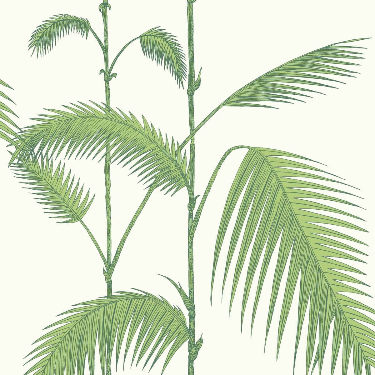 Papier Peint Palm Cole And Son