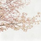 Panneau Blossom Almond Tree  Pink Coordonné