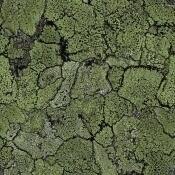 Papier peint Liquen Green Coordonné