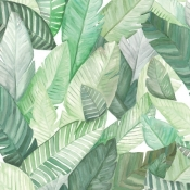 Papier peint Banano Blanco Coordonné