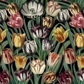 Papier peint Tulipa Dark green/Yellow/Red Mindthegap