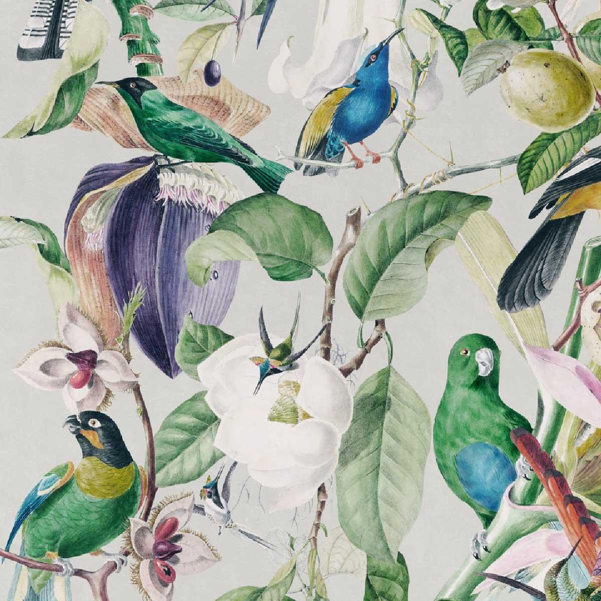 Papier Peint Tropical Birds Mindthegap