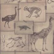 Papier peint Zooarchaeology Grey/Anthracite Mindthegap