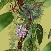 Papier peint Tropical Tropical grande largeur  Vanilla Timorous Beasties