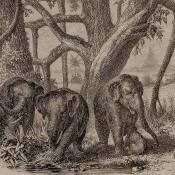 Panneau Elephants Brown Coordonné
