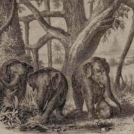 Panneau Elephants Coordonné Brown 6500506N Coordonné