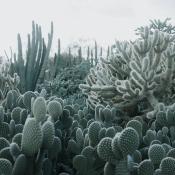 Panneau Cacti Lush Rebel Walls