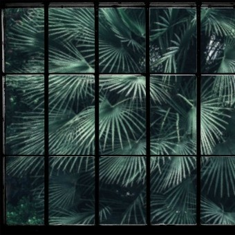 Tropical Window Panel Tropical Window Les Dominotiers