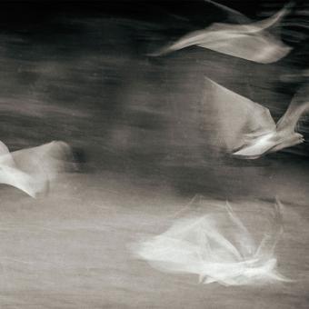Panneau Fluttering GUlls Opale Artwallz Paris