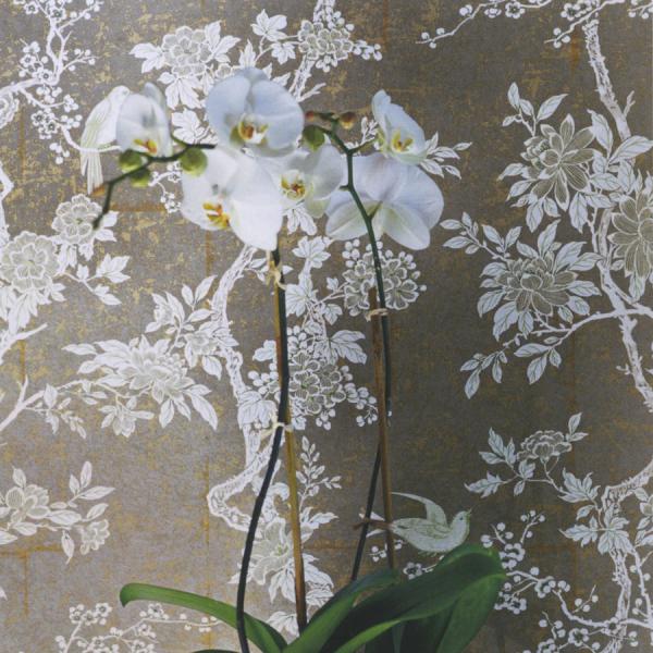 papier peint marlowe floral ralph lauren. Black Bedroom Furniture Sets. Home Design Ideas
