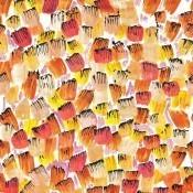 Tissu Pinceau Orange Lalie Design
