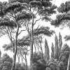 Papier peint Pins et Cyprès 1 Ananbô