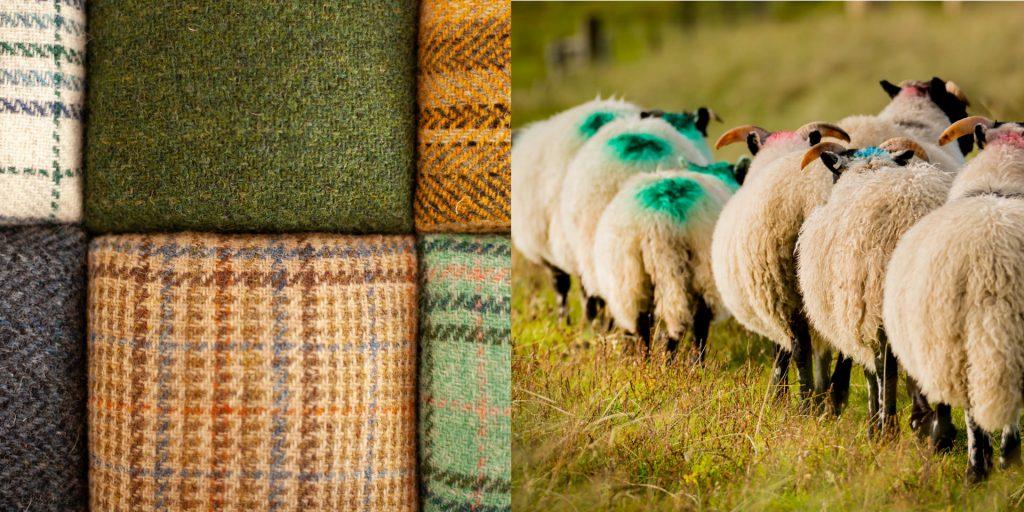 Photographie des moutons locaux Blackface - Lewis Mackenzie